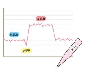 基礎体温表②
